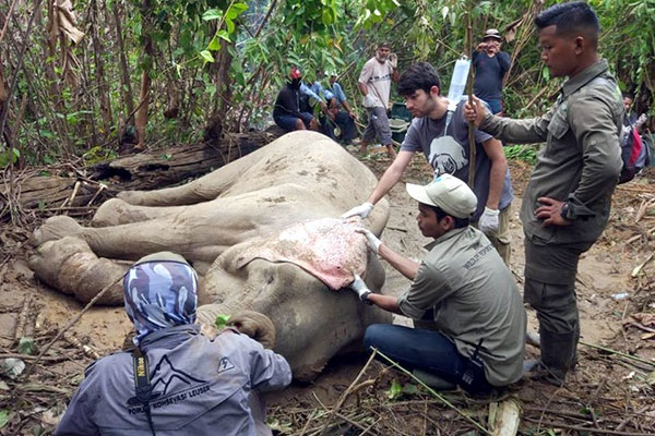 The International Elephant Project is supported by Rewards4Earth