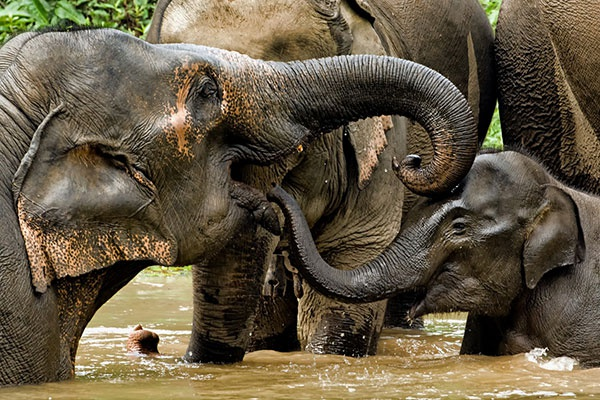 The International Elephant Project is now supported by Rewards4Earth